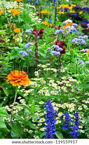 flower bed of bright flowers - stock photo