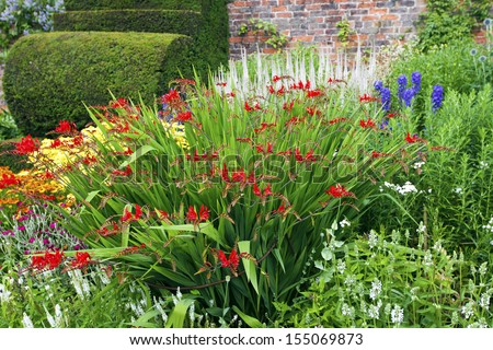 Flower bed with red crocosmia flowers in a garden. - stock photo