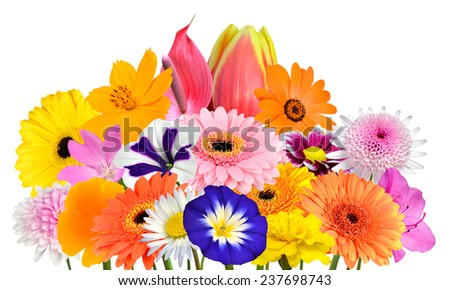 Flower Bouquet  Collection of Various Colorful Flowers and Wildflowers Isolated on White Background. Vibrant Red, Blue, Pink, Purple, Yellow White, and Orange Colors. Bunch of dahlia, marigold - stock photo