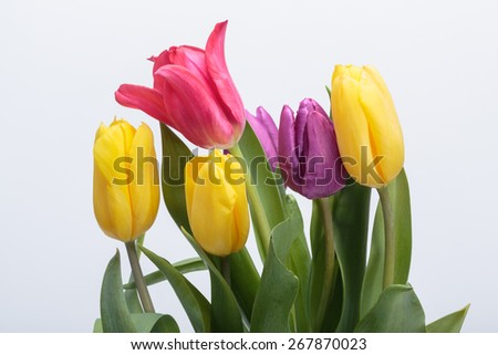 Flower bouquet from colorful tulips - stock photo