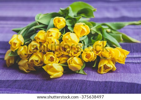 Flower bouquet of yellow tulips lying on purple background - stock photo