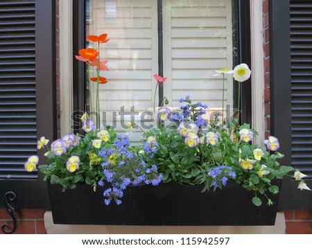 Flower box in window of a brownstone building - stock photo
