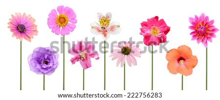 Flower branch: colorful flowers  - stock photo