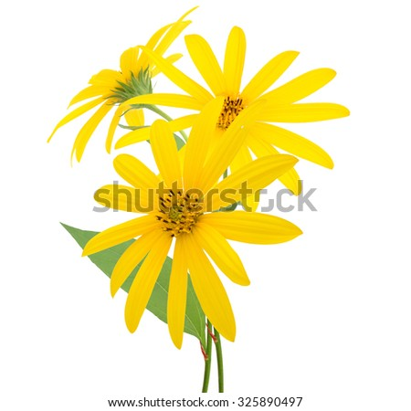 Flower branch: yellow flower on a white background - stock photo