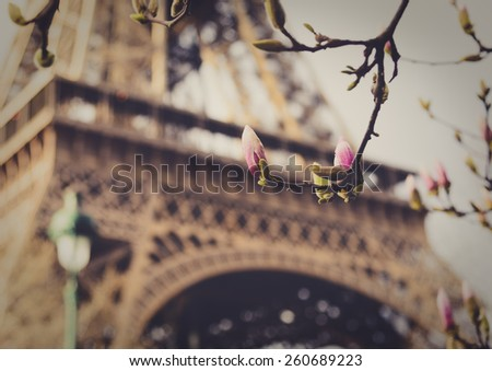 Flower bud and Eiffel tower in soft background,  retro vintage look, France - stock photo