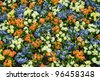 Flower carpet, colorful - natural pattern background - stock photo