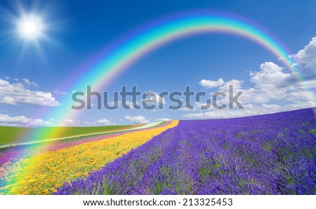 Flower field and blue sky with clouds. - stock photo
