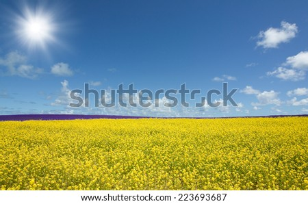 Flower field and blue sky with sun - stock photo
