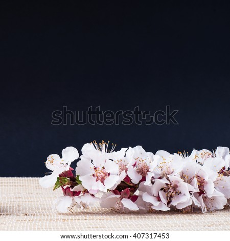 Flower. Floral spring leaf. Beautiful fresh branch with buds. Plant with petals in bloom, blossom. Beauty seasonal nature blooming in april. Delicate tree bunch on black background. - stock photo
