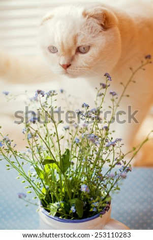 flower forget-me-not and white cat - stock photo