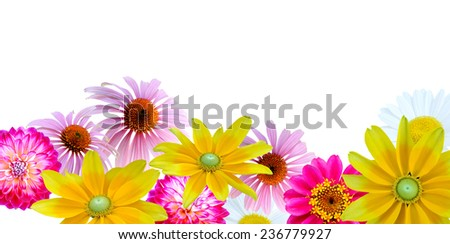 flower frame: assorted on colorful flowers - stock photo