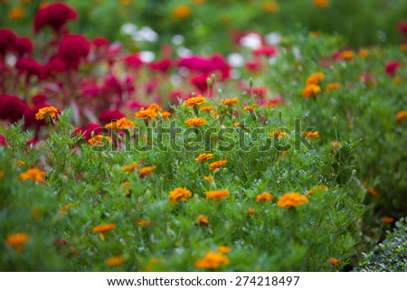 Flower garden. - stock photo