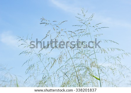 flower grass - stock photo