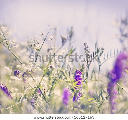 flower grass at relax morning time/spring field background - stock photo
