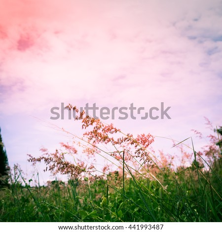 flower grass in park and sky cloud with colorful tone - stock photo