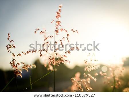 flower grass on morning fresh time - stock photo