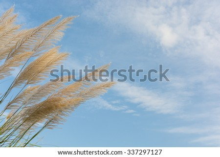 Flower grass with cloud and blue sky - stock photo