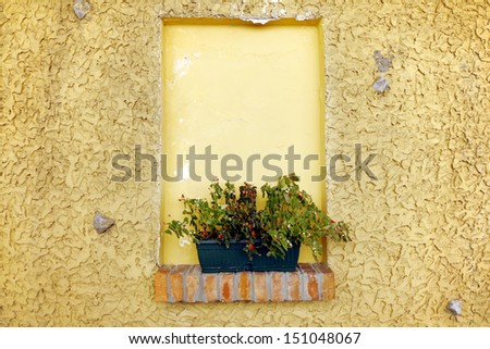 Flower in a pot put in a niche on a wall, stone window, space for your advertisement - stock photo
