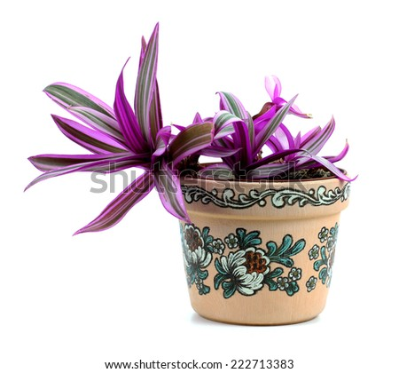 flower in a yellow plastic pot isolated on white background - stock photo