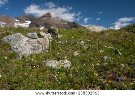 Flower in bed in apls with mountain in back ground - stock photo