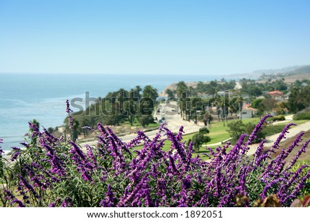 flower in front of road facing Pacific Ocean - stock photo