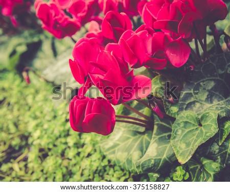 flower in garden - stock photo