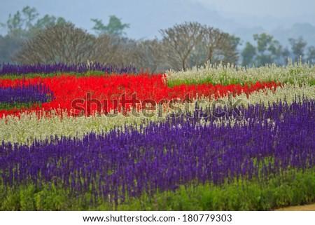 flower in garden of thailand - stock photo