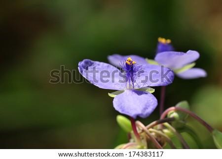 Flower in morning light - stock photo