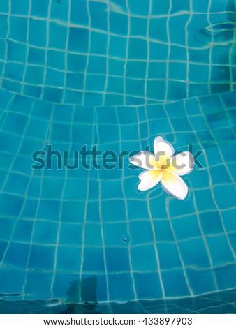 Flower in Pool - stock photo