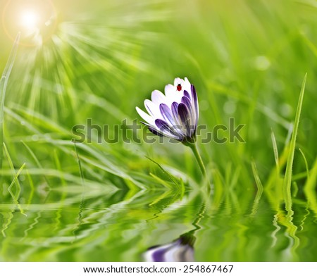 flower in the field - stock photo