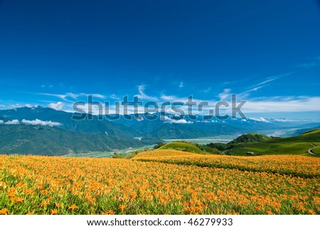 flower in the mountain with beautiful cloudscape background - stock photo
