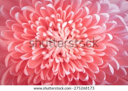 Flower macro - stock photo