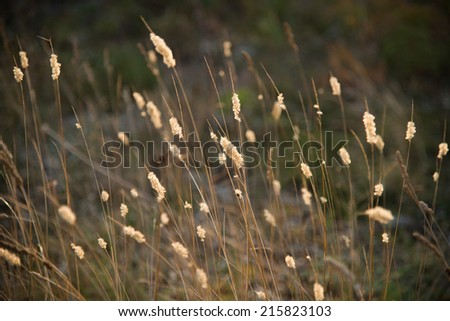 Flower meadow at sunset - stock photo