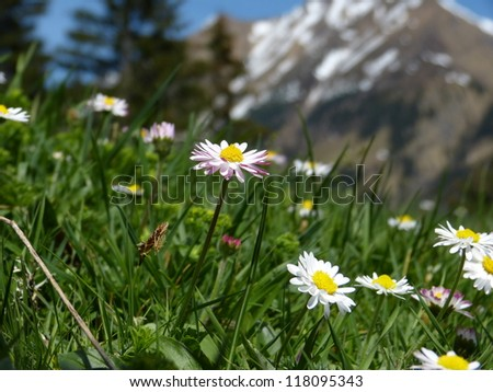 Flower meadow in the Alps - stock photo