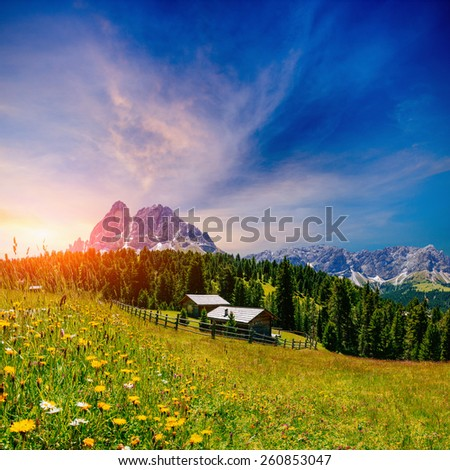 flower meadow in the Alps at sunset - stock photo