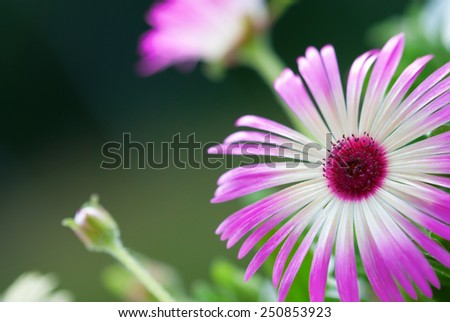 Flower Meadow With A Few Daisy Flowers Close Up - stock photo