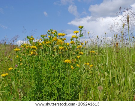 flower meadow with birdsfoot trefoil and cloudy sky - stock photo