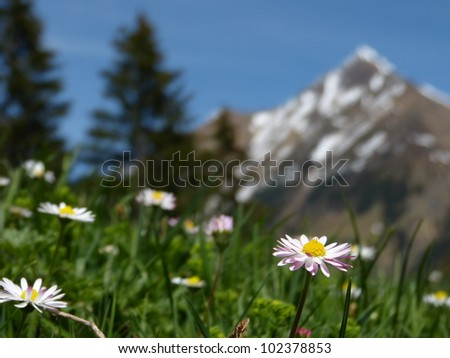 Flower meadow with mountains in the background - stock photo