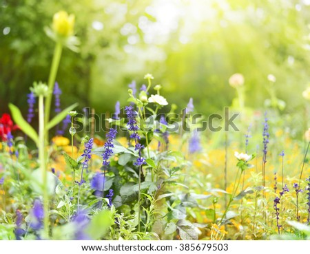 Flower meadow with selective focus on the foreground. Purple and yellow wildflowers on a meadow with sun and copy space. - stock photo