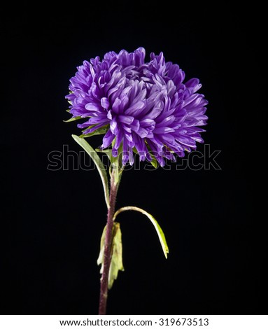 flower on a black background - stock photo