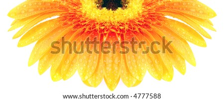 flower on a white background - stock photo
