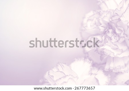 flower on soft pastel color in blur style - stock photo