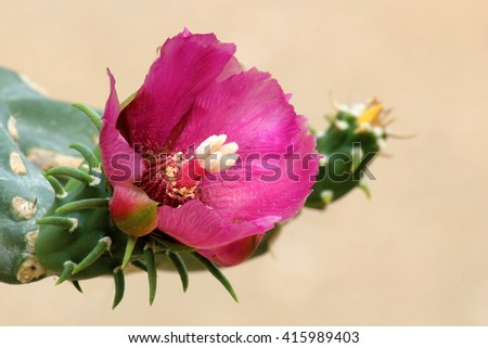 Flower on top of a Green Cactus in the Desert - stock photo