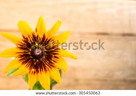 Flower on wood background, shallow depth of field useful as greeting card or birthday card. - stock photo