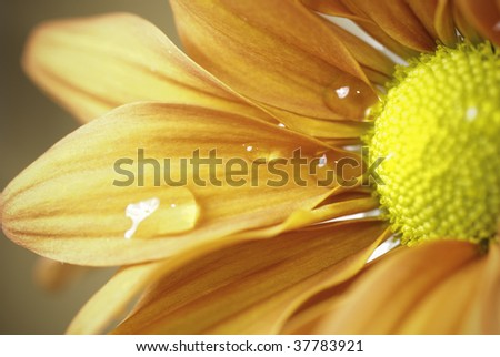 Flower part - stock photo