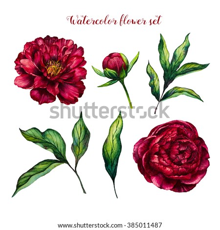 Flower peony, watercolor flower. Flowers and leaves peonies. Watercolor peony isolated on white background. Flower set. Design for mother's day, women's day, wedding, save the date, card, holiday - stock photo