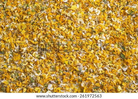 flower petals on the ground from Drought-Tolerant Flowering Acacia Trees.  Also known as as acacia, thorntree, whistling thorn, or wattle trees. - stock photo