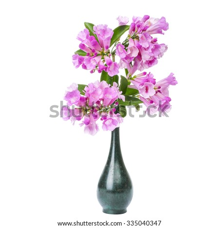 flower pink in vases isolated  on white - stock photo