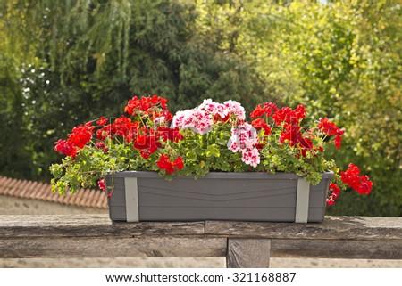 flower pot in classic garden - stock photo