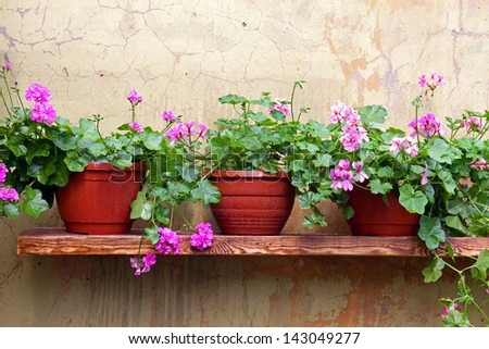 flower pot on a shelf on the wall - stock photo
